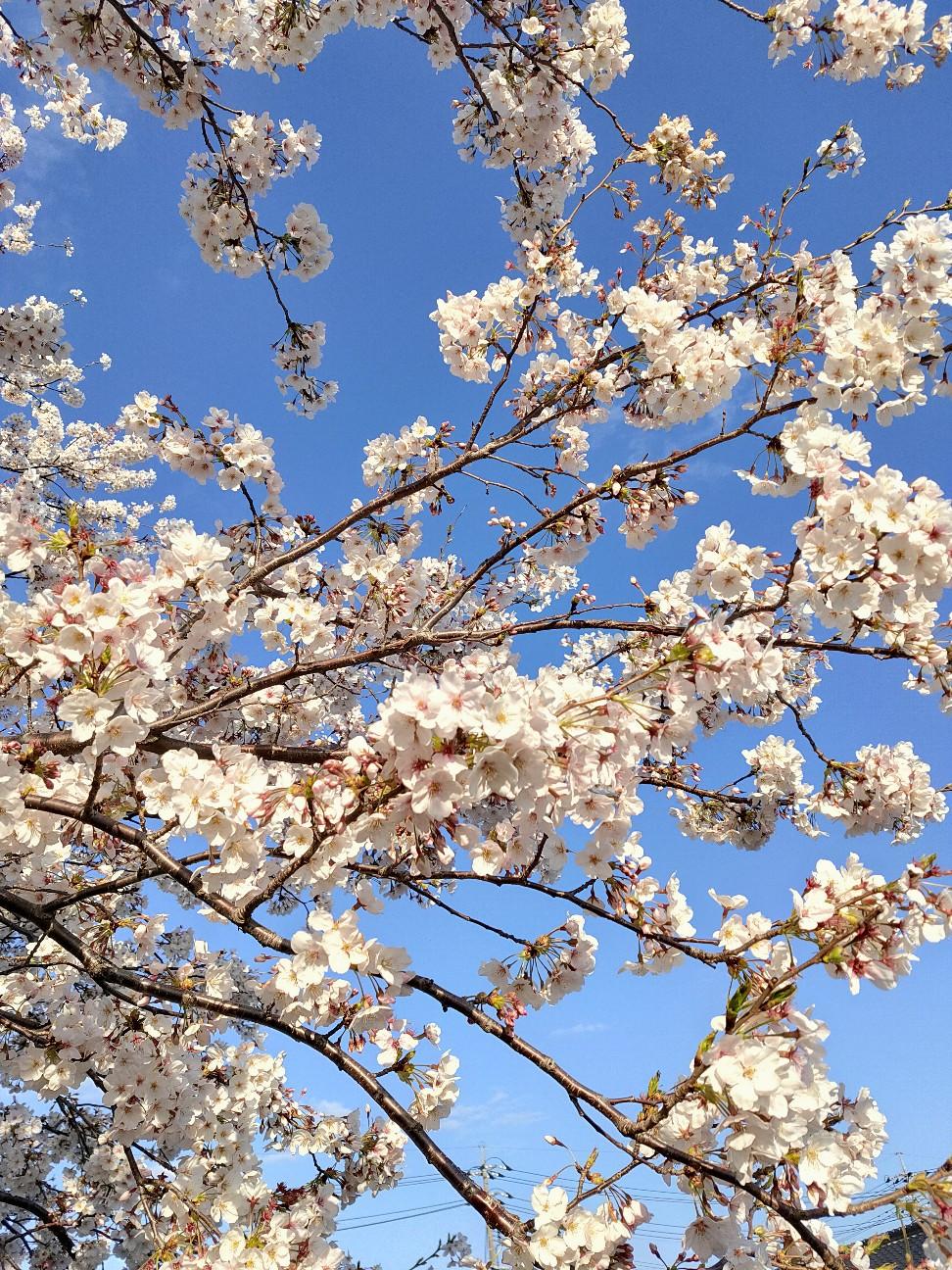 f:id:shingo_shiraishi:20200405221331j:image