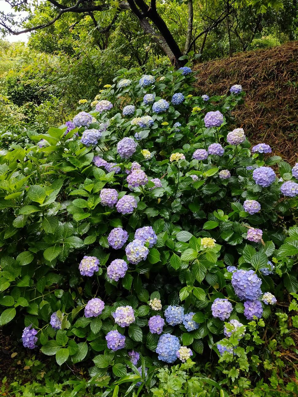 f:id:shingo_shiraishi:20200613163452j:image