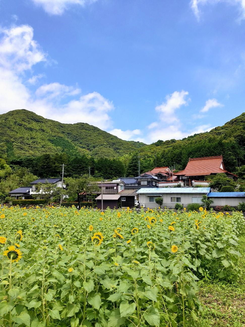 f:id:shingo_shiraishi:20200711234538j:image
