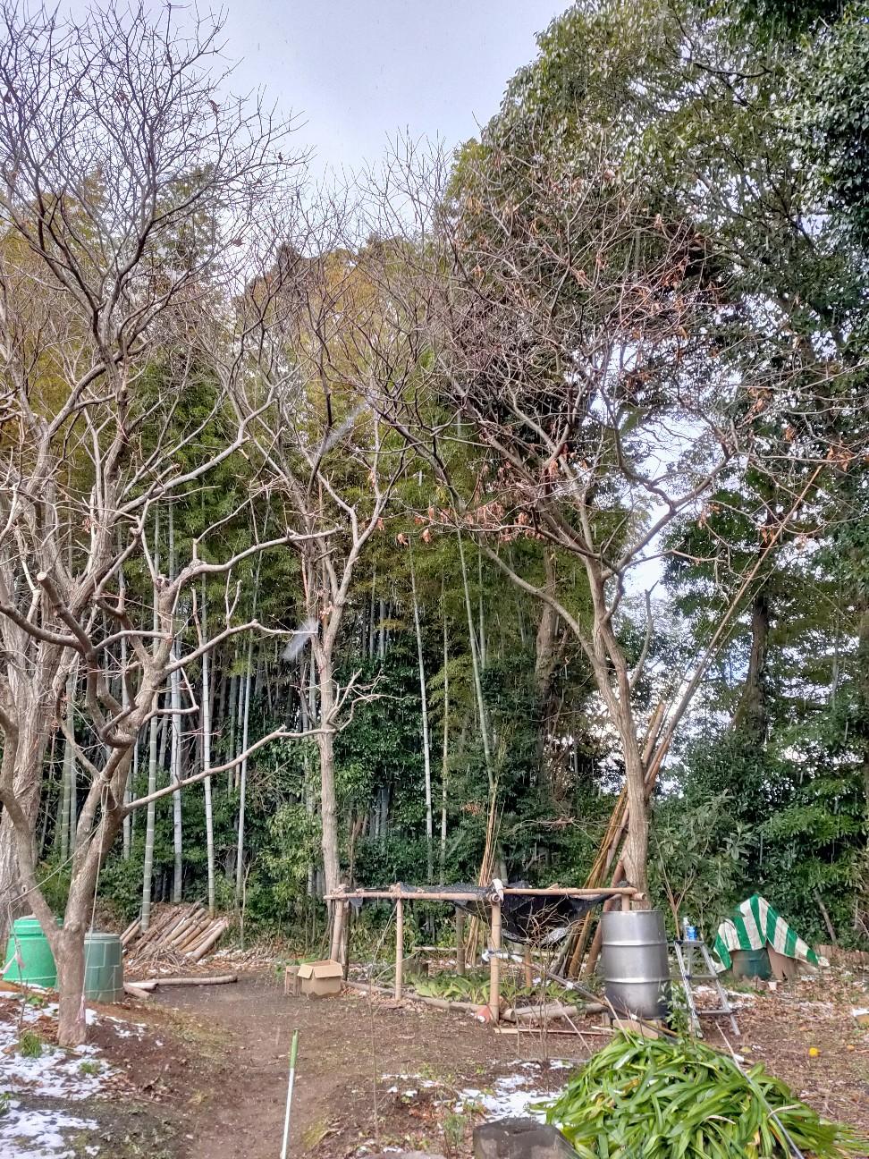 f:id:shingo_shiraishi:20210110232003j:image