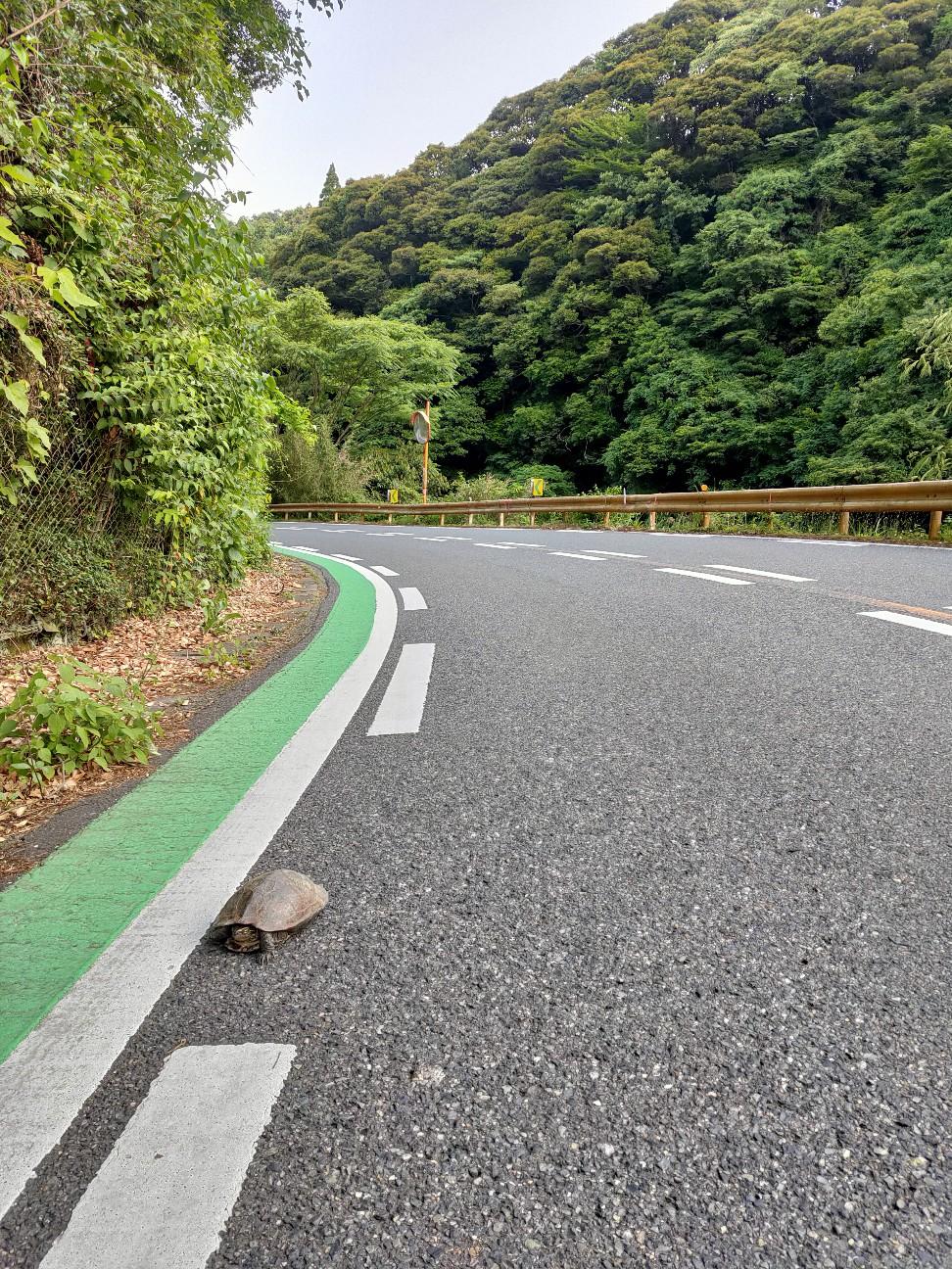 f:id:shingo_shiraishi:20210609211434j:image