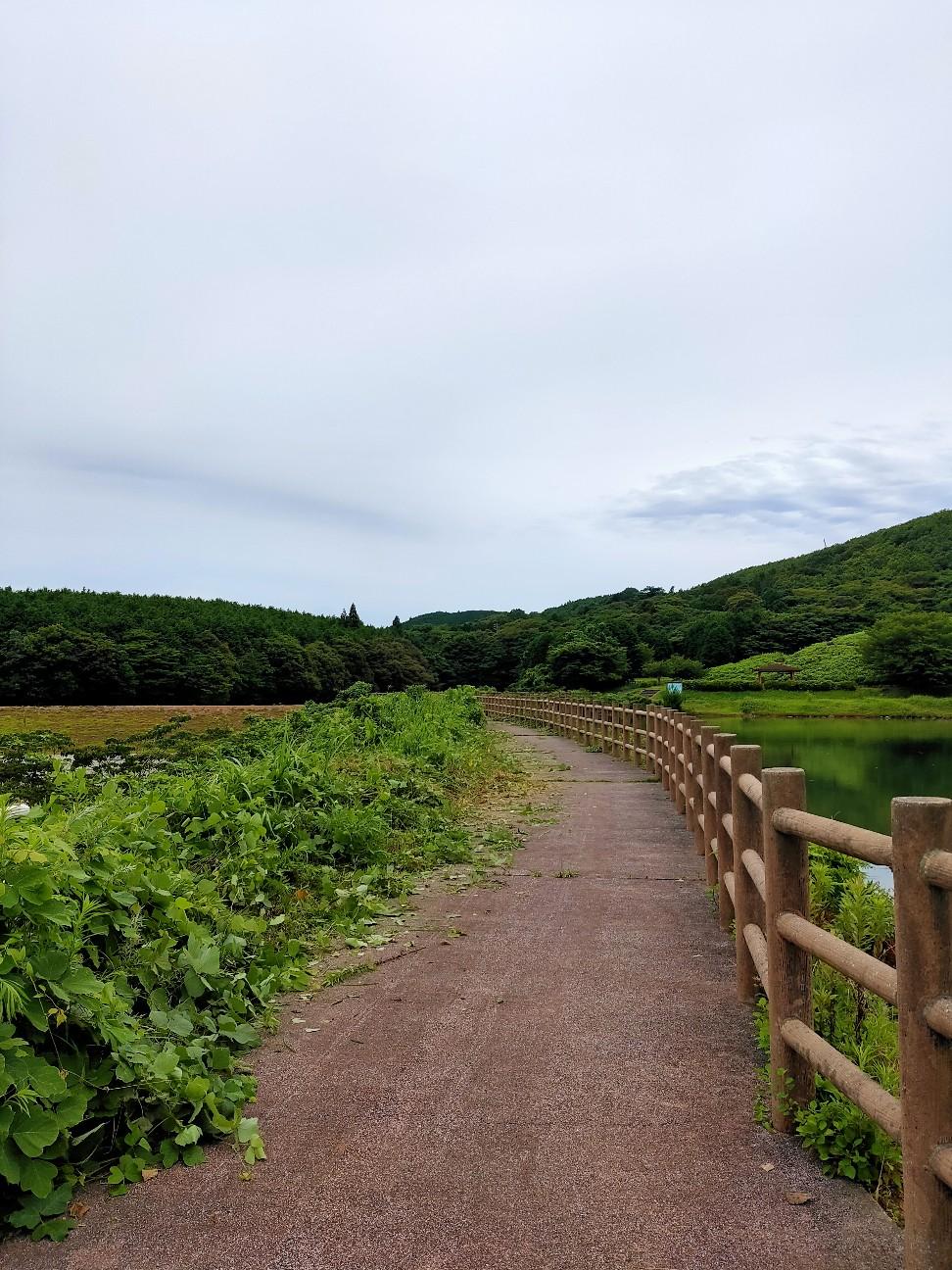 f:id:shingo_shiraishi:20210719213718j:image