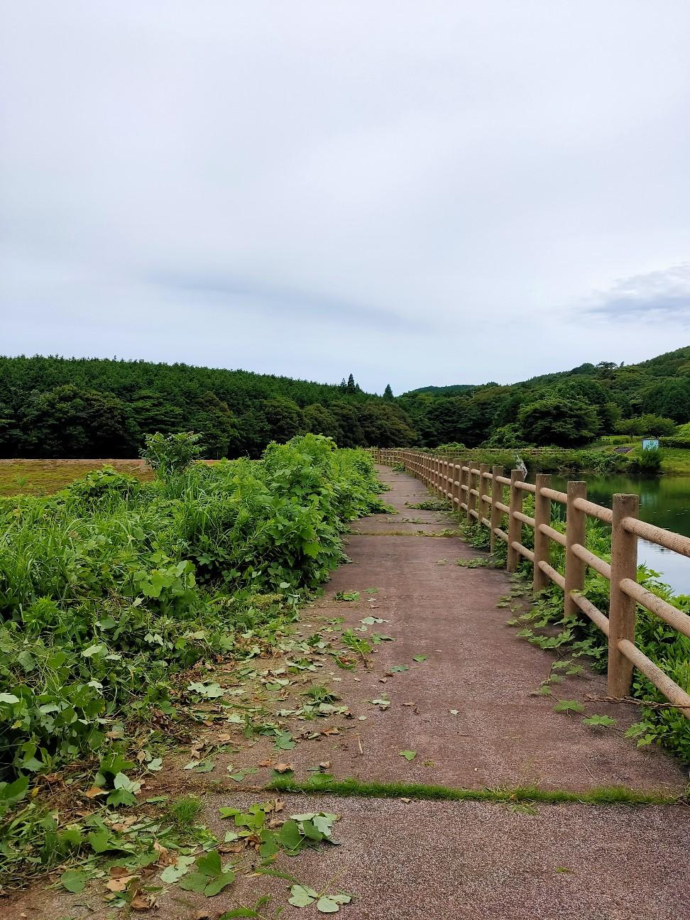 f:id:shingo_shiraishi:20210719213820j:image
