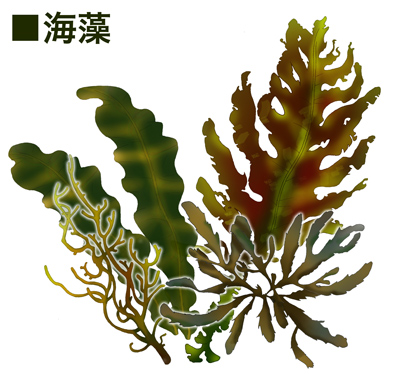 f:id:shinichi5:20150820084935j:plain