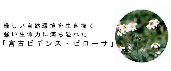 f:id:shinichikanzaki:20180215180609j:plain