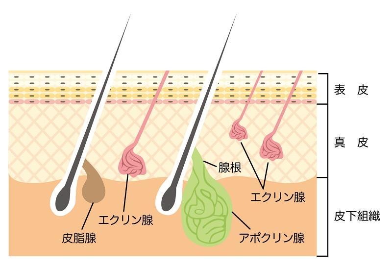 f:id:shinigami5sei:20190605015742j:plain