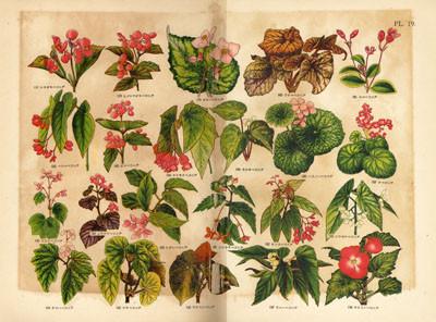 これが牧野富太郎が、一生、植物図鑑のライバルとしていた村越三千男の ...