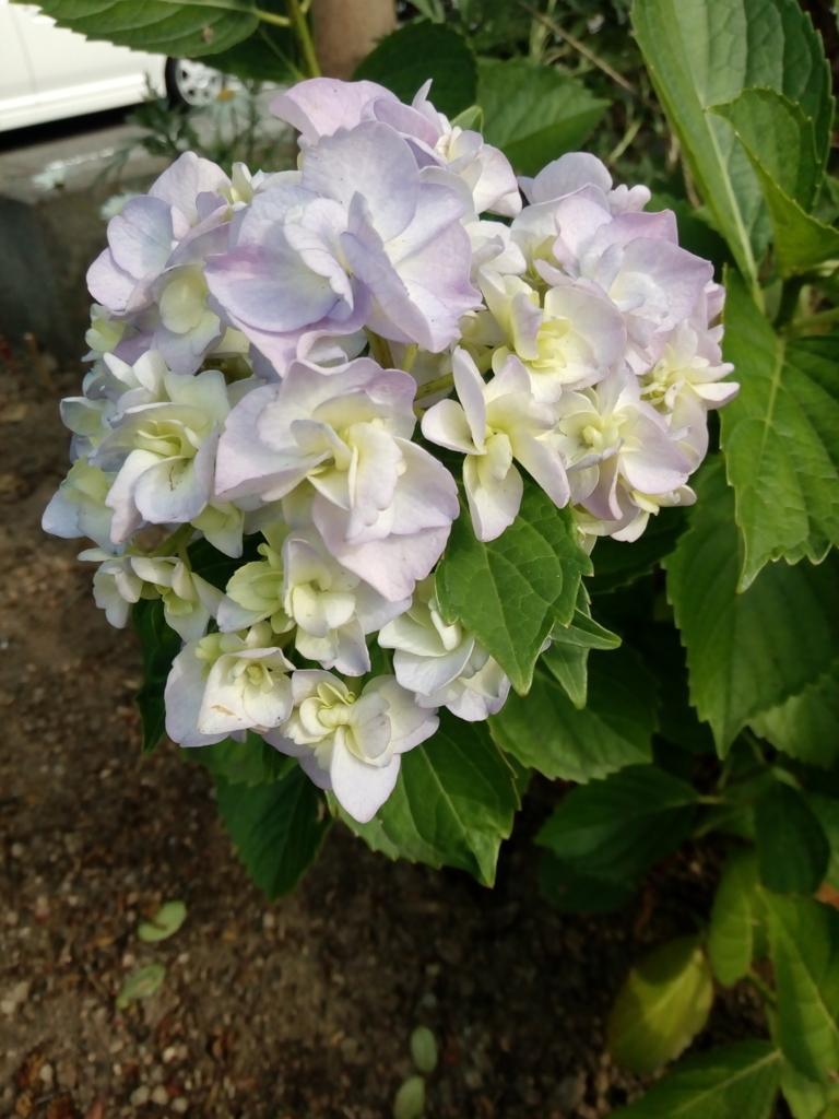 f:id:shinkanacchann:20180527230256j:plain