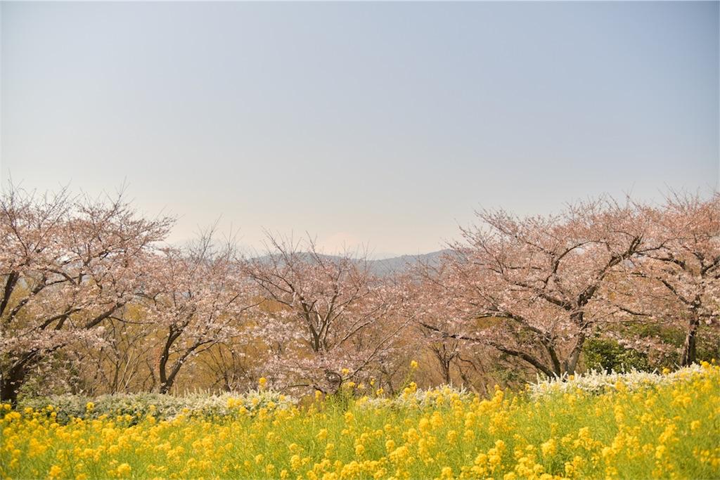 f:id:shinmuraoka:20180325224137j:image