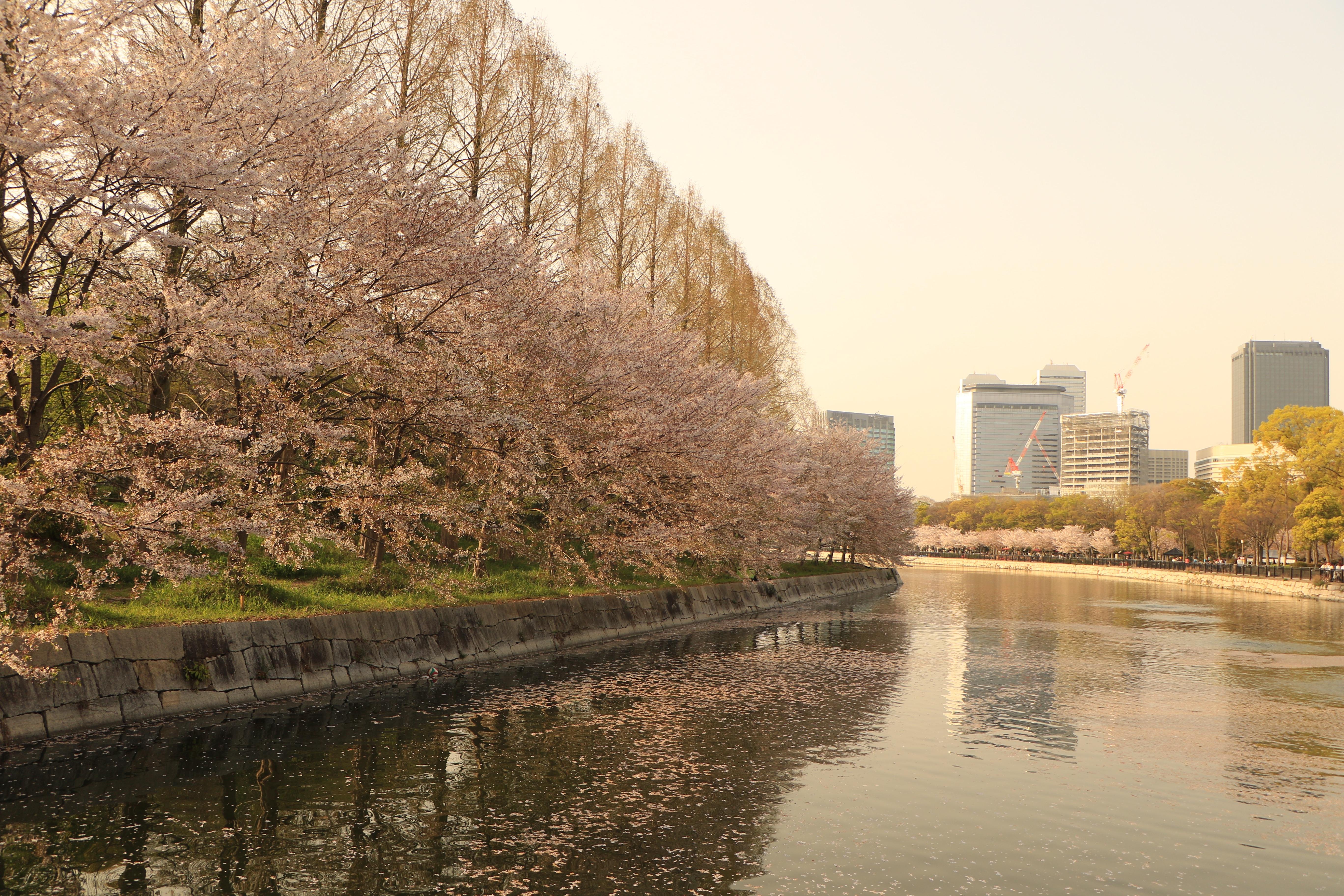 f:id:shinnosuke-hrta:20180404144053j:image