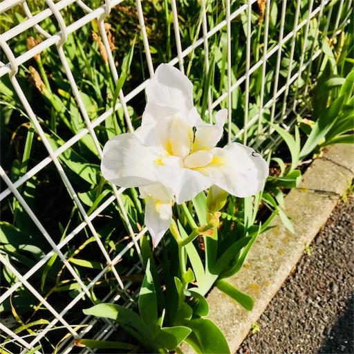 f:id:shinnosuke416:20180429221832j:image