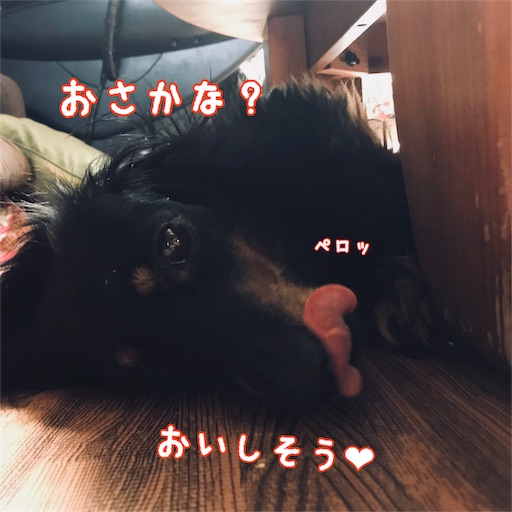 f:id:shinnosuke416:20180806083521j:image