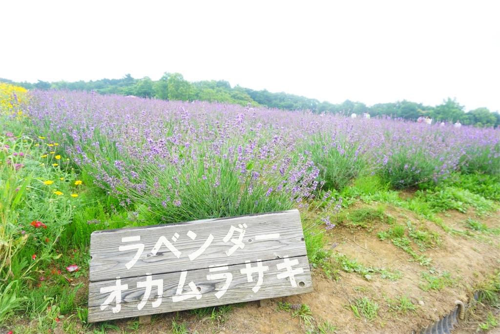 f:id:shino_mizobuchi:20170710001307j:image