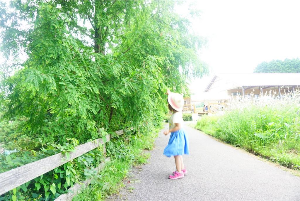 f:id:shino_mizobuchi:20170710001745j:image