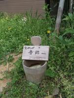 f:id:shinobazukun:20070421145740j:image:h150