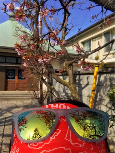 f:id:shinobee320:20190212190031j:image