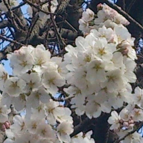 f:id:shinobu11:20130319153610j:image:h300