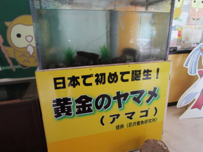 f:id:shinobu11:20160616091853j:plain