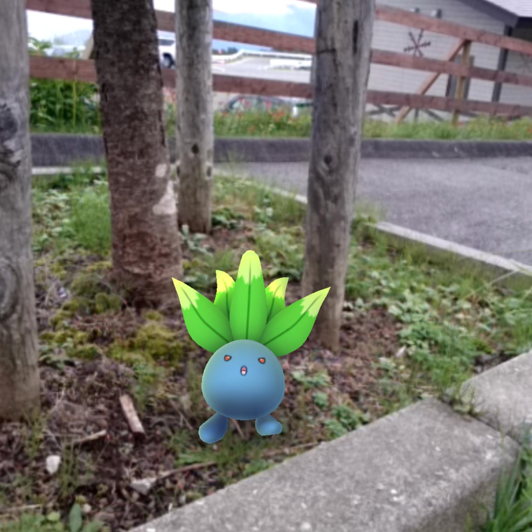 f:id:shinobu11:20161013134050j:plain