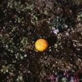 野菜と果物、どちらが多く落ちているのか