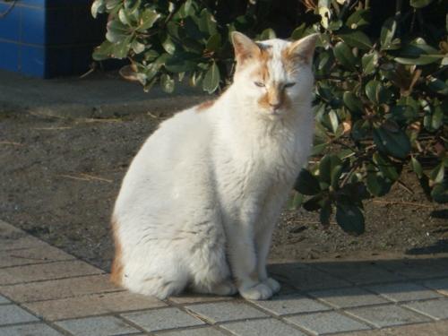 f:id:shinobu12:20130108202349j:image:h250