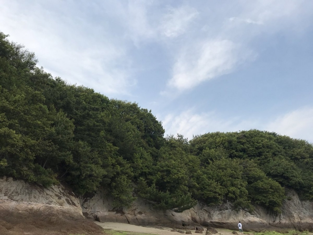 f:id:shinobutakahasi:20180626193317j:plain