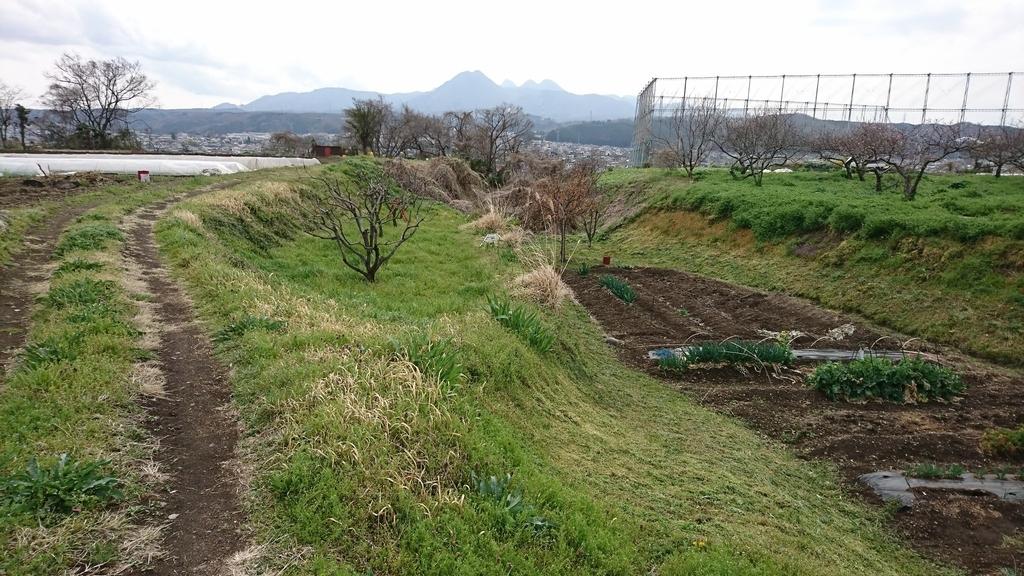 f:id:shinobutakahasi:20190215053138j:plain