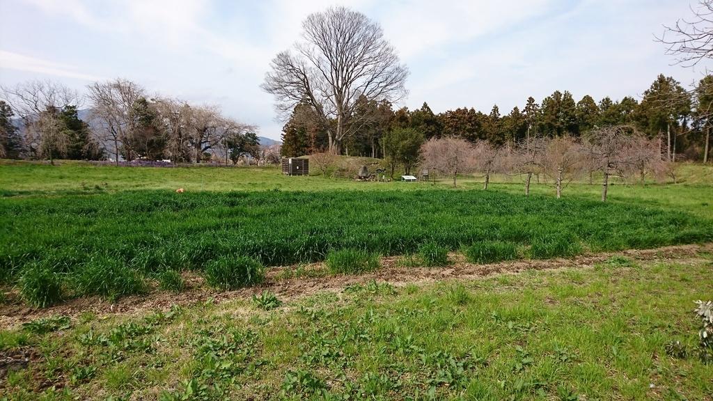 f:id:shinobutakahasi:20190309073528j:plain