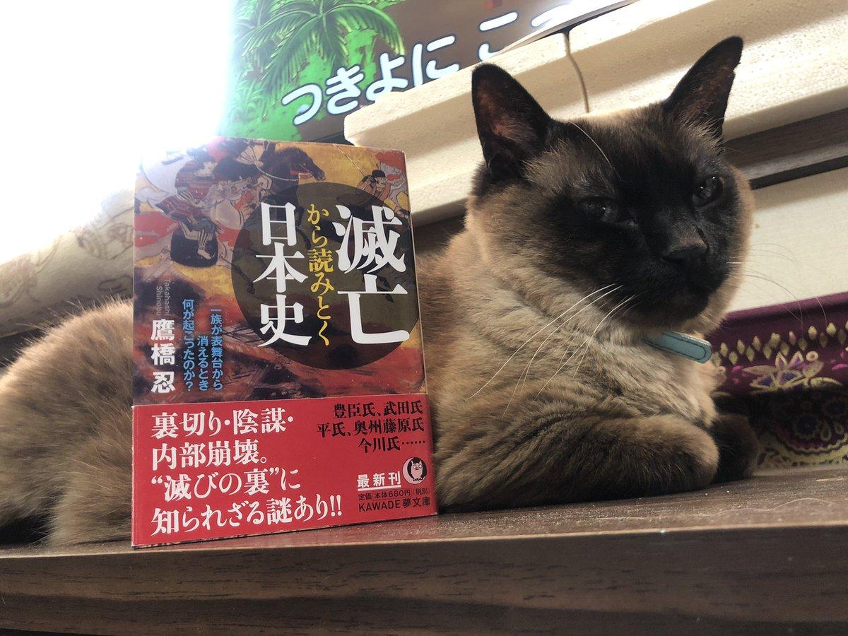 f:id:shinobutakahasi:20190505134107j:plain