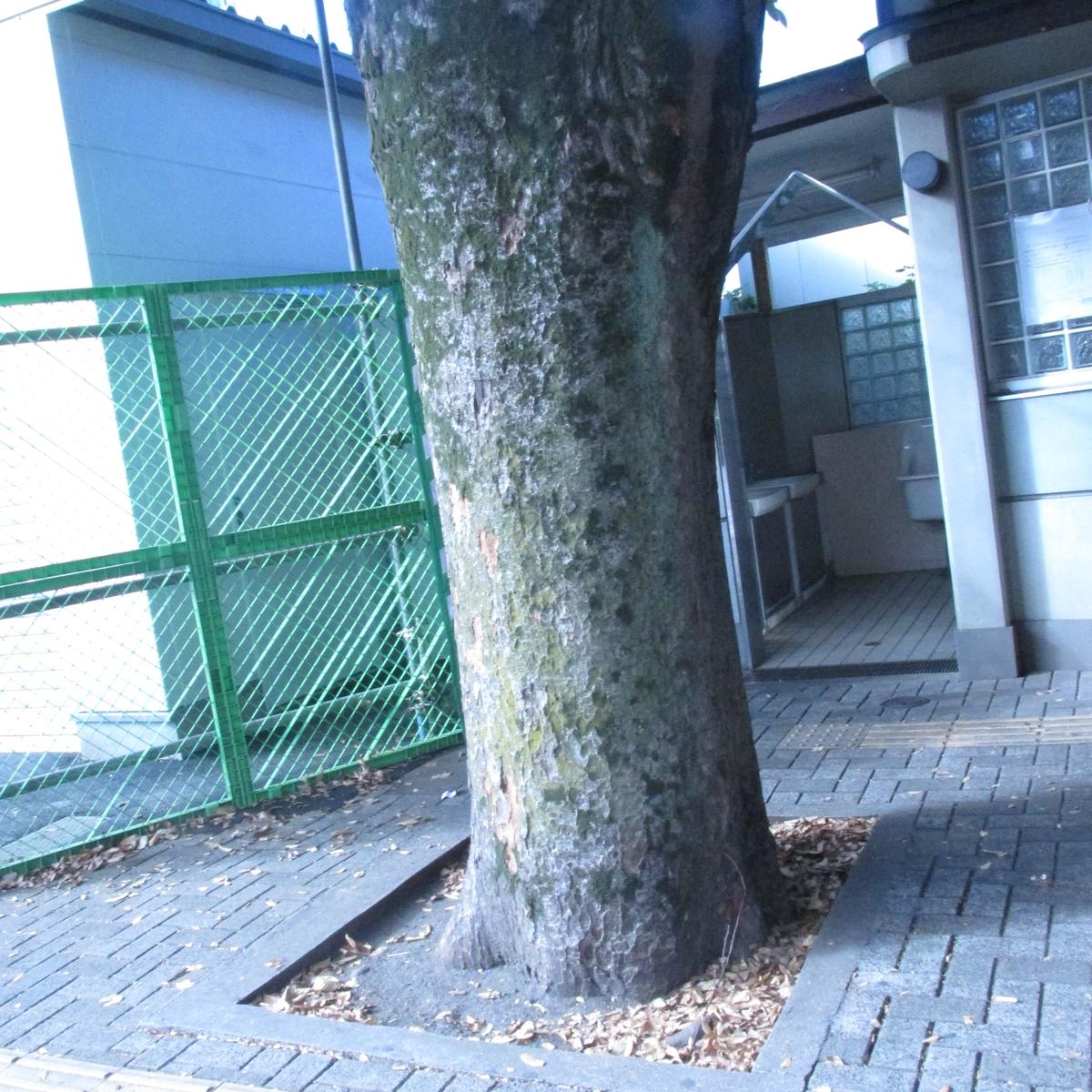 f:id:shinobutakahasi:20200401171606j:plain