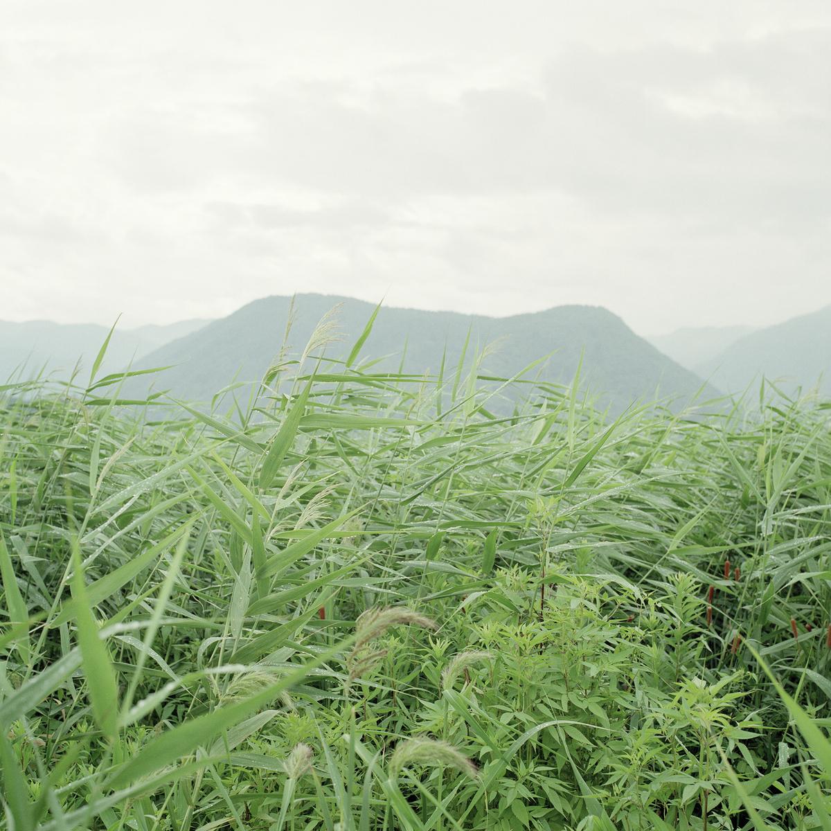 f:id:shinodayu:20200213201606j:plain