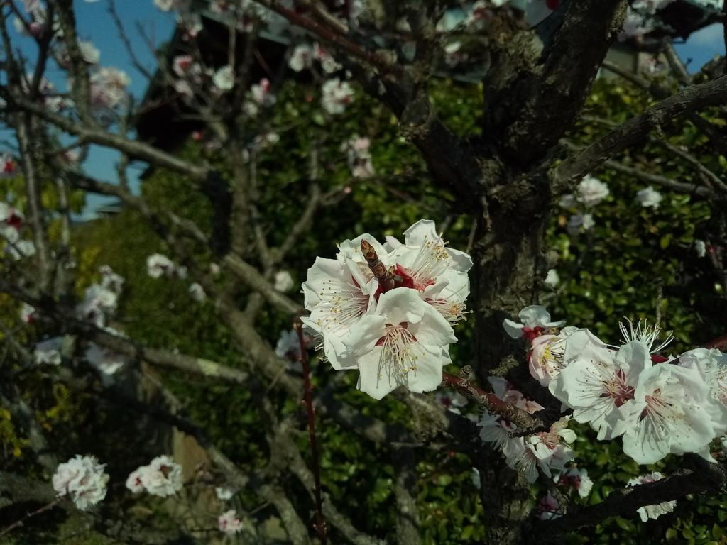 f:id:shinohara-tax-office:20180318124904j:plain