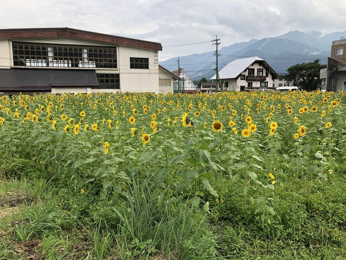 f:id:shinokawa-office:20200805114240j:plain