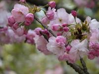 2005年4月のお花見で。