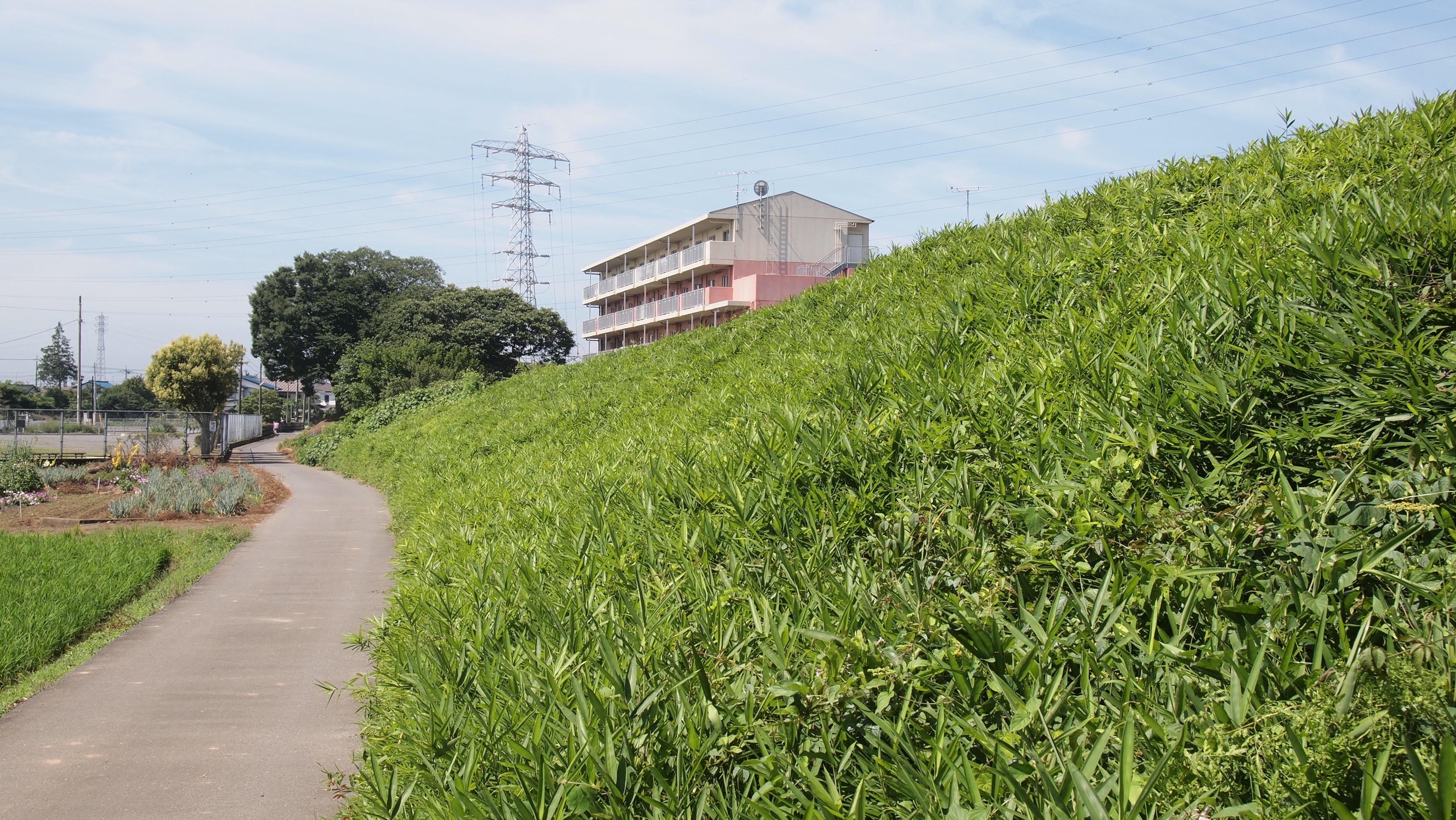 f:id:shinsaku1234t501:20170306201526j:image