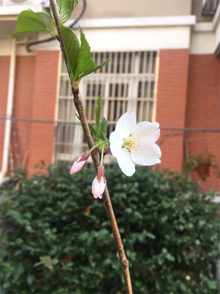 f:id:shinseisei:20180425192207j:image