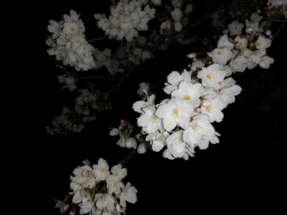 f:id:shinshizue:20190328145249j:plain