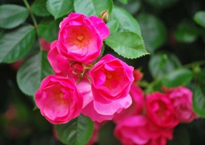 f:id:shinsyu7:20120527110112j:image:w500