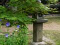 京都新聞写真コンテスト 鹿王院の桔梗