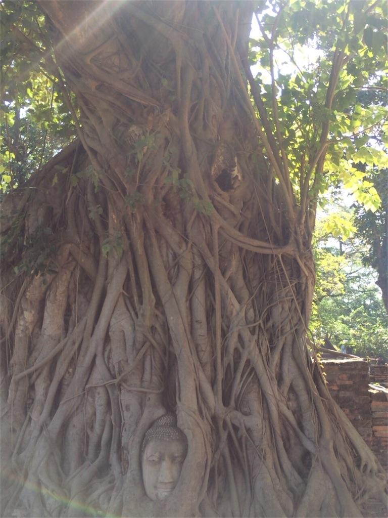 f:id:shinuyaru:20161221155752j:image