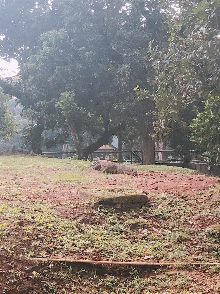 f:id:shinuyaru:20190107062541j:image