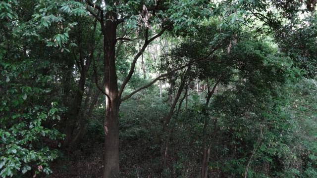 f:id:shinya-no-ringosawagi:20171001132352j:plain