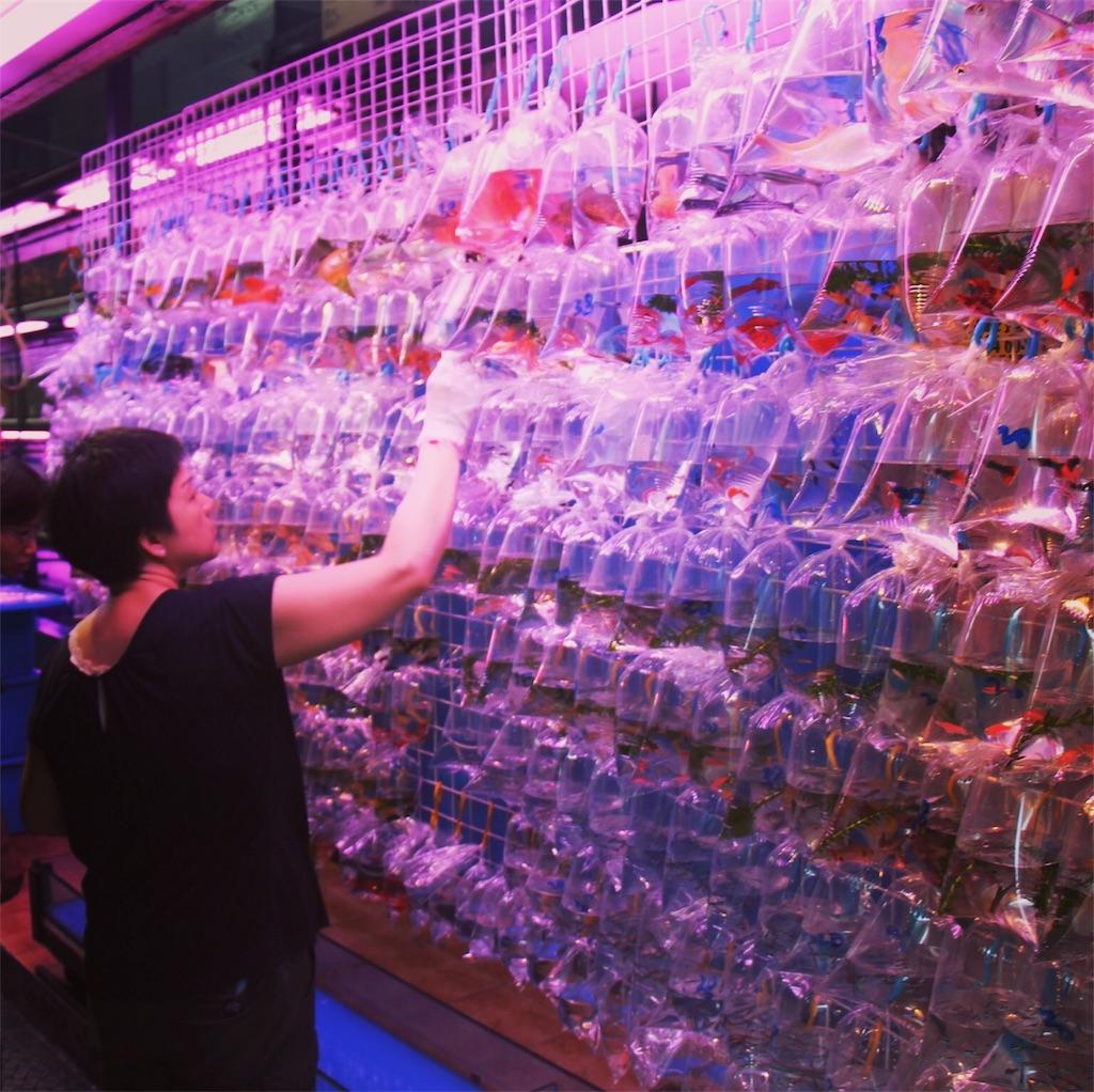 金魚を販売する女性