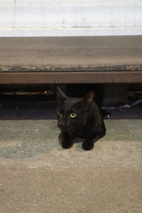 ワットアルンの野良猫