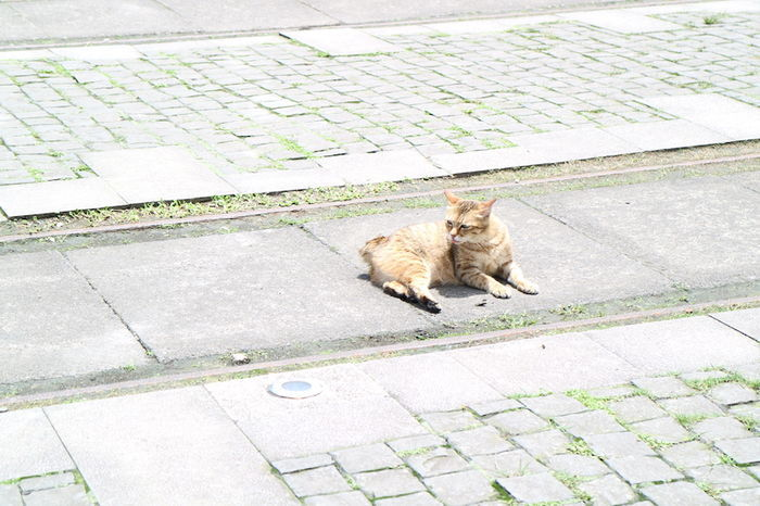 猴硐にいるネコ