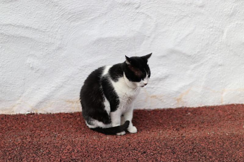 志摩地中海村 猫