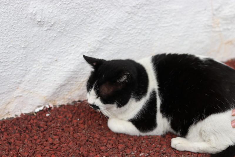 志摩地中海村 看板猫 ブッチー