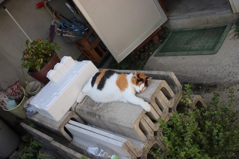 愛知県豊田市 猫