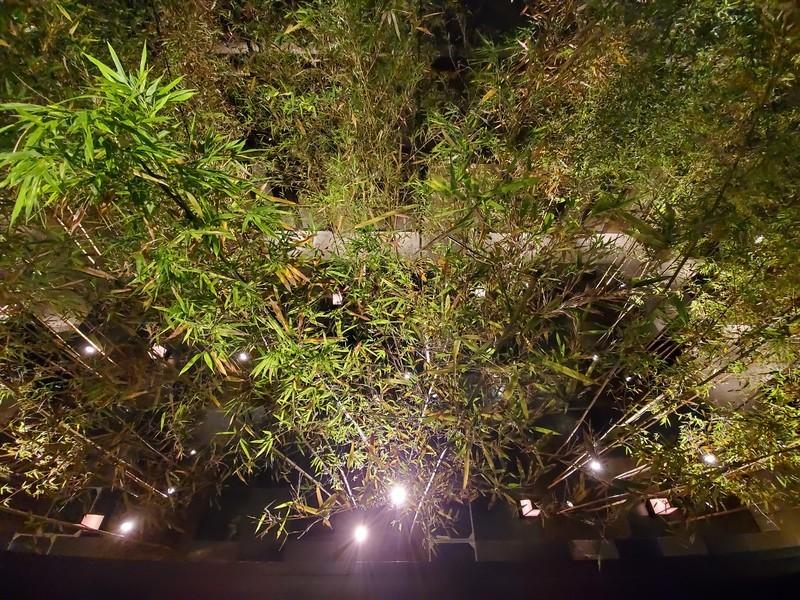 京都悠洛ホテルMギャラリーの竹林