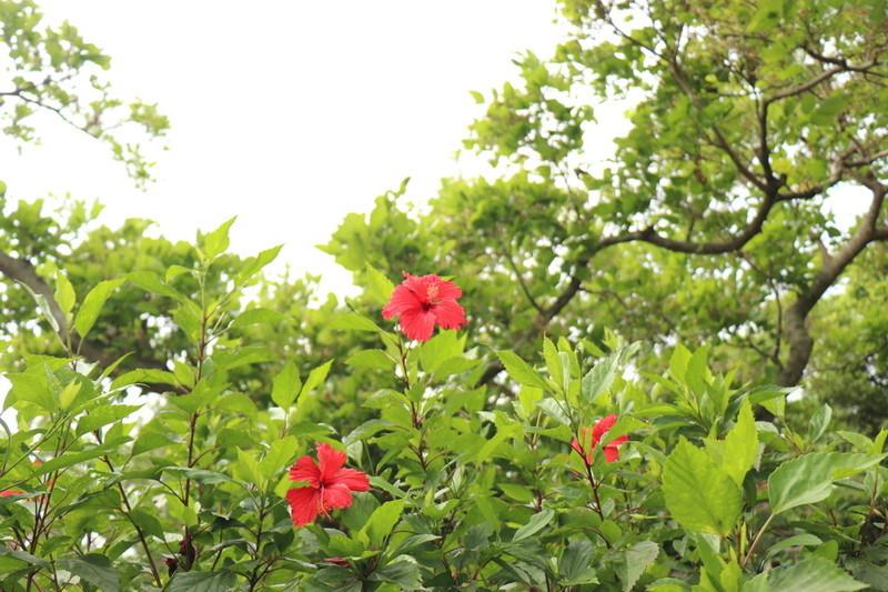 沖縄県宮古島3日目はお土産屋を巡りお土産をたくさん買った